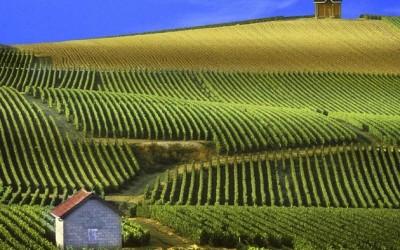 Najbolja vina svijeta